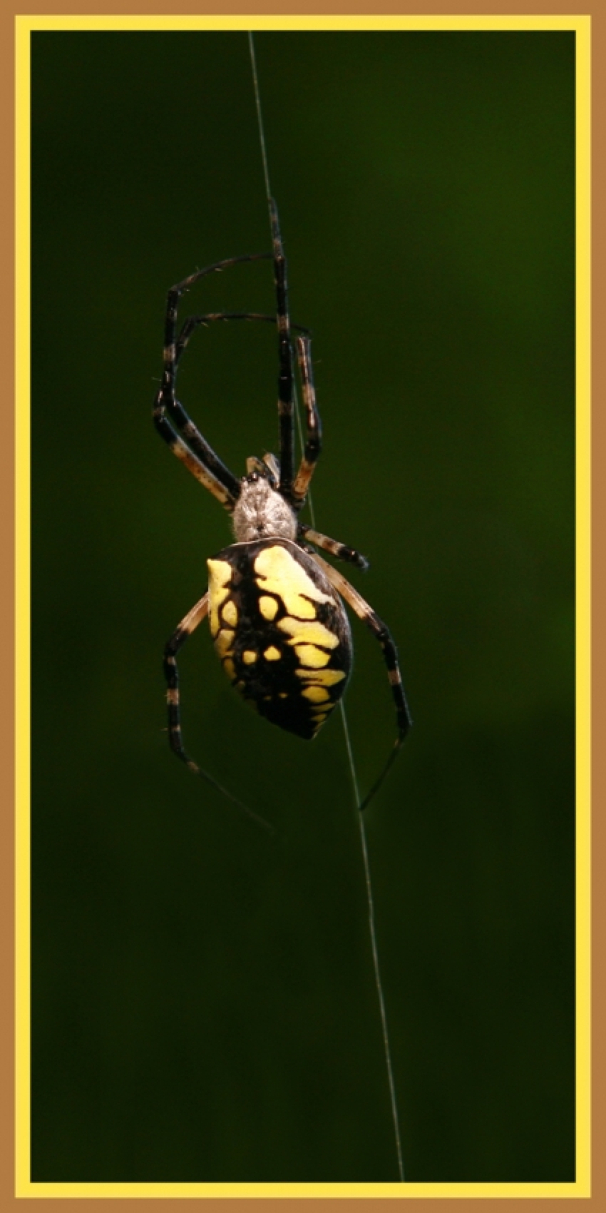 gallery/files-images-IMG_0037_CLIMBING_SPIDER_3x6_copy